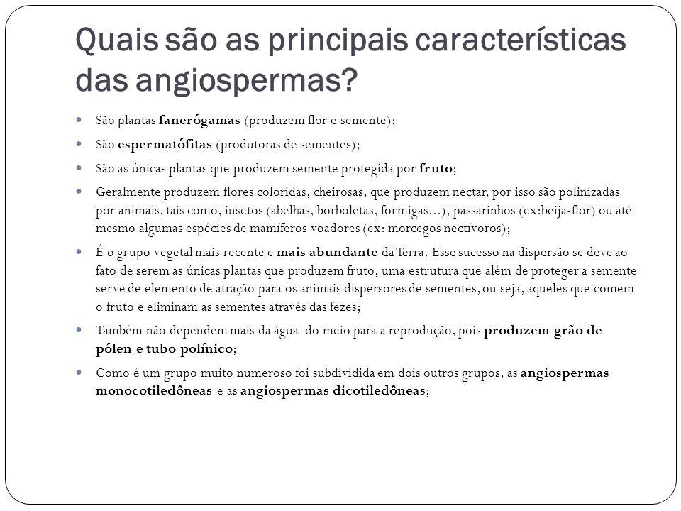 Quais são as principais características das angiospermas