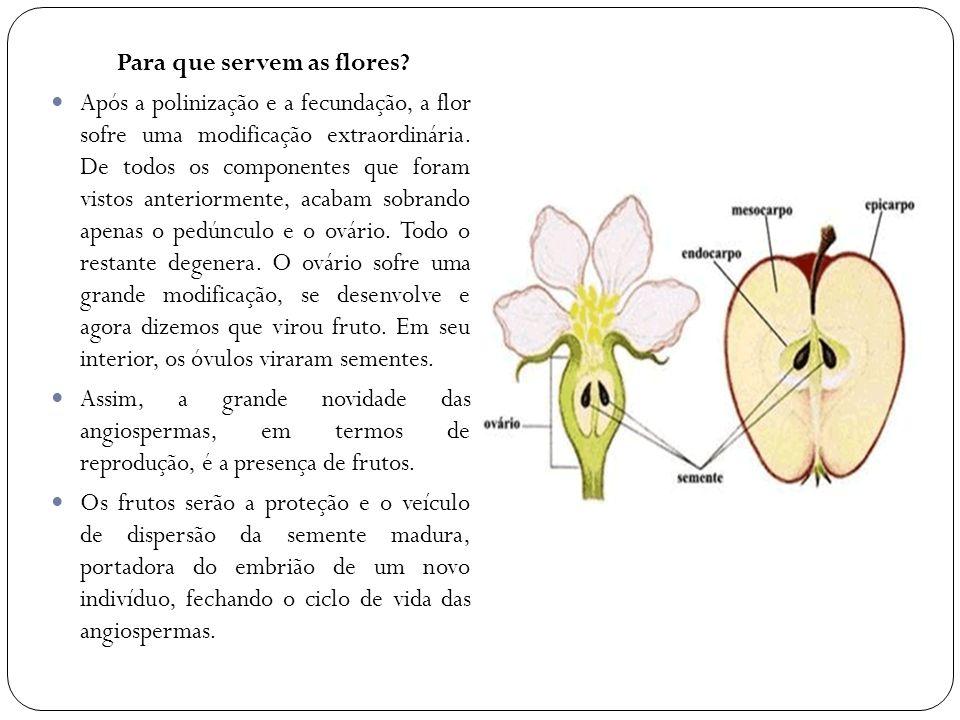 Para que servem as flores