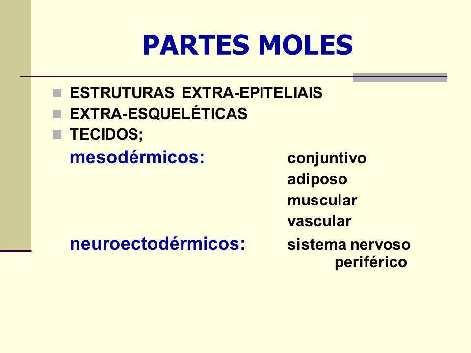 PARTES MOLES ESTRUTURAS EXTRA-EPITELIAIS EXTRA-ESQUELÉTICAS TECIDOS;