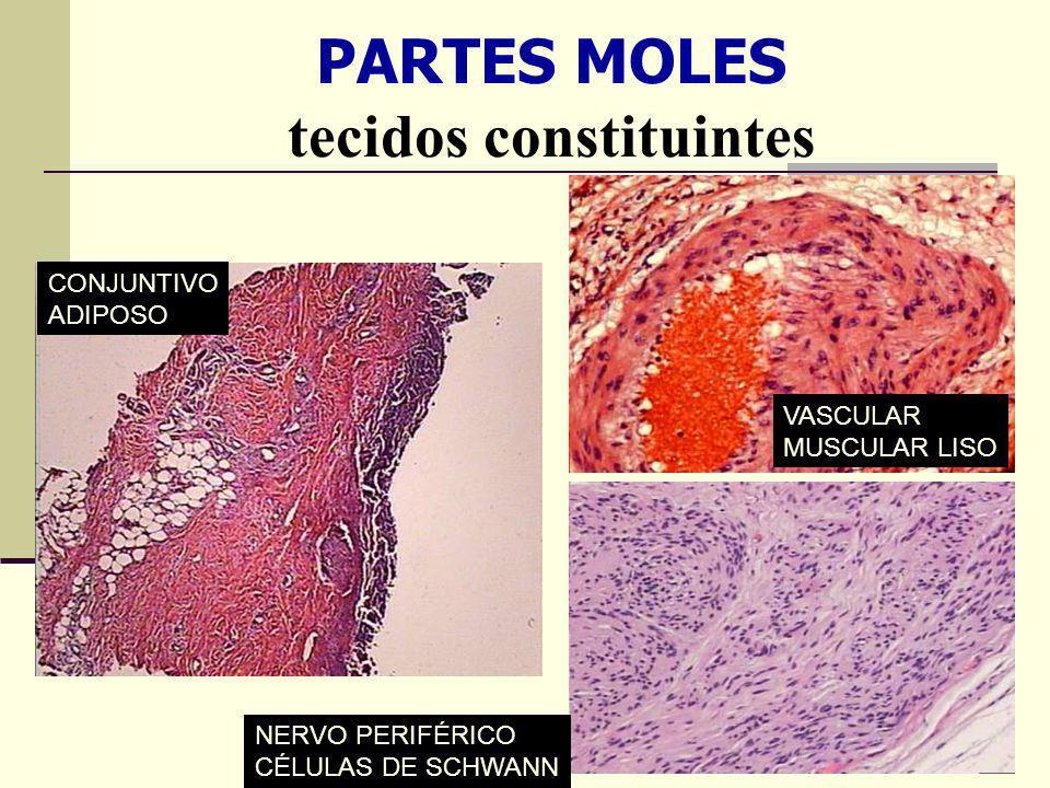 PARTES MOLES tecidos constituintes