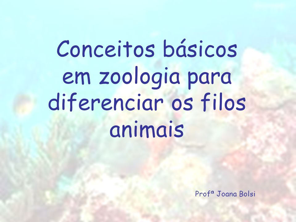 Conceitos básicos em zoologia para diferenciar os filos animais
