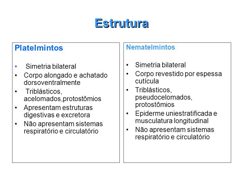 Estrutura Platelmintos Nematelmintos Simetria bilateral