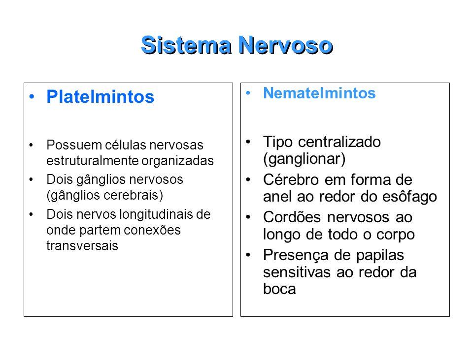 Sistema Nervoso Platelmintos Nematelmintos