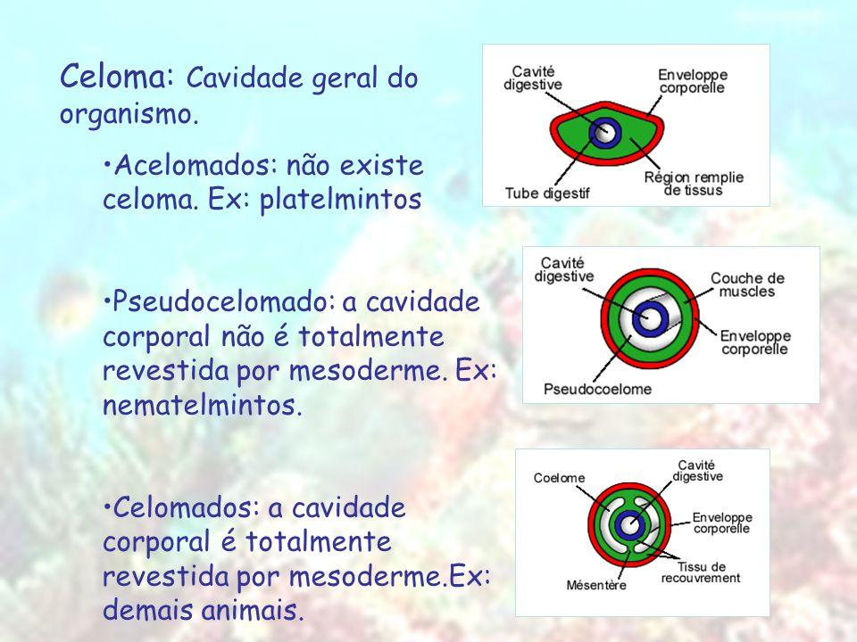 Celoma: Cavidade geral do organismo.