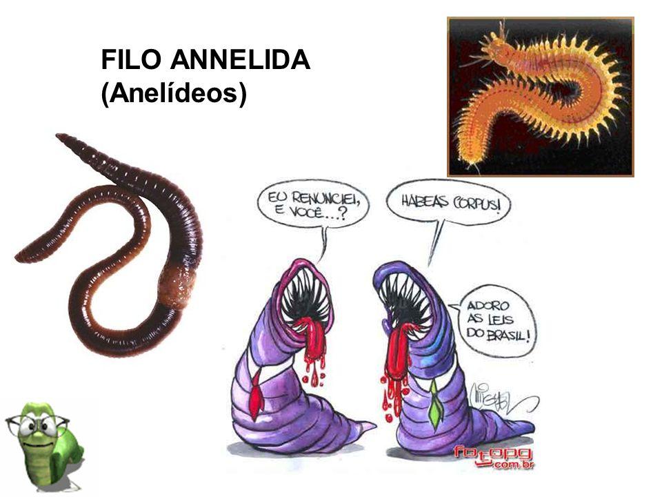 FILO ANNELIDA (Anelídeos)