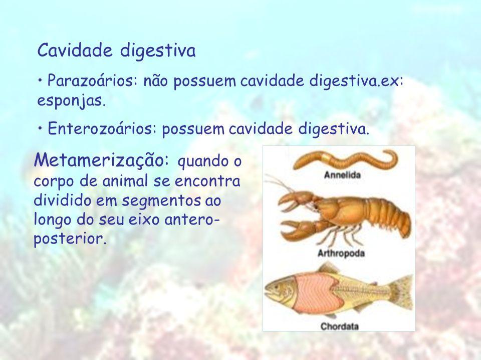 Cavidade digestiva Parazoários: não possuem cavidade digestiva.ex: esponjas. Enterozoários: possuem cavidade digestiva.