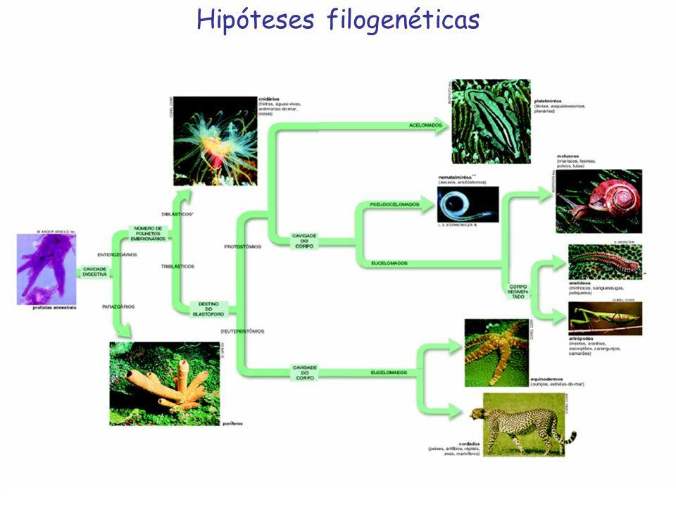 Hipóteses filogenéticas