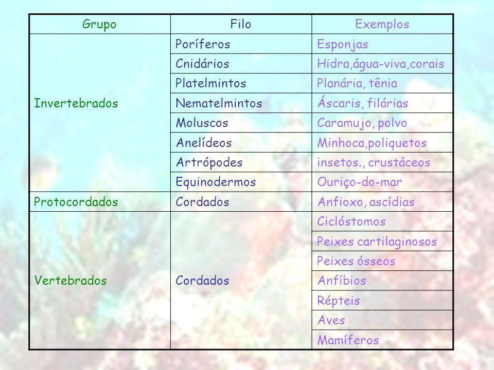 Grupo Filo. Exemplos. Poríferos. Esponjas. Cnidários. Hidra,água-viva,corais. Platelmintos. Planária, tênia.