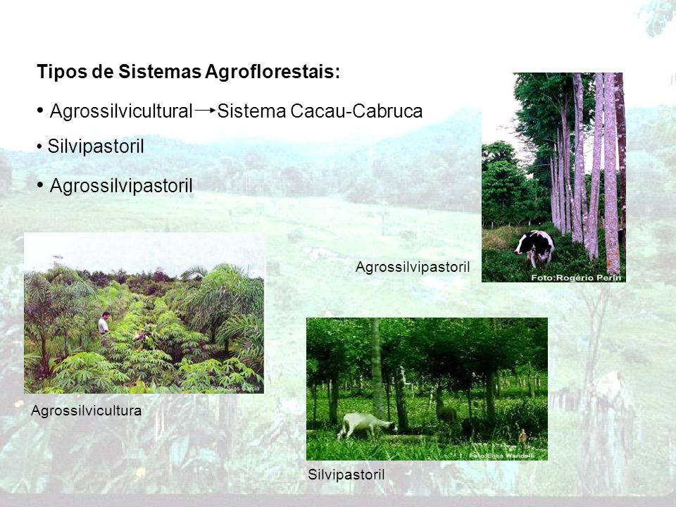 Agrossilvicultural Sistema Cacau-Cabruca