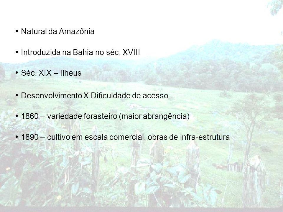 Natural da Amazônia Introduzida na Bahia no séc. XVIII. Séc. XIX – Ilhéus. Desenvolvimento X Dificuldade de acesso.