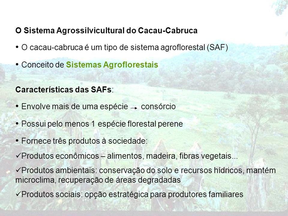 O cacau-cabruca é um tipo de sistema agroflorestal (SAF)