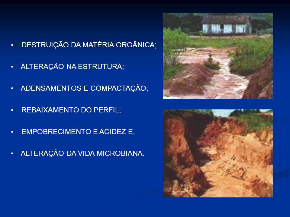 DESTRUIÇÃO DA MATÉRIA ORGÂNICA;