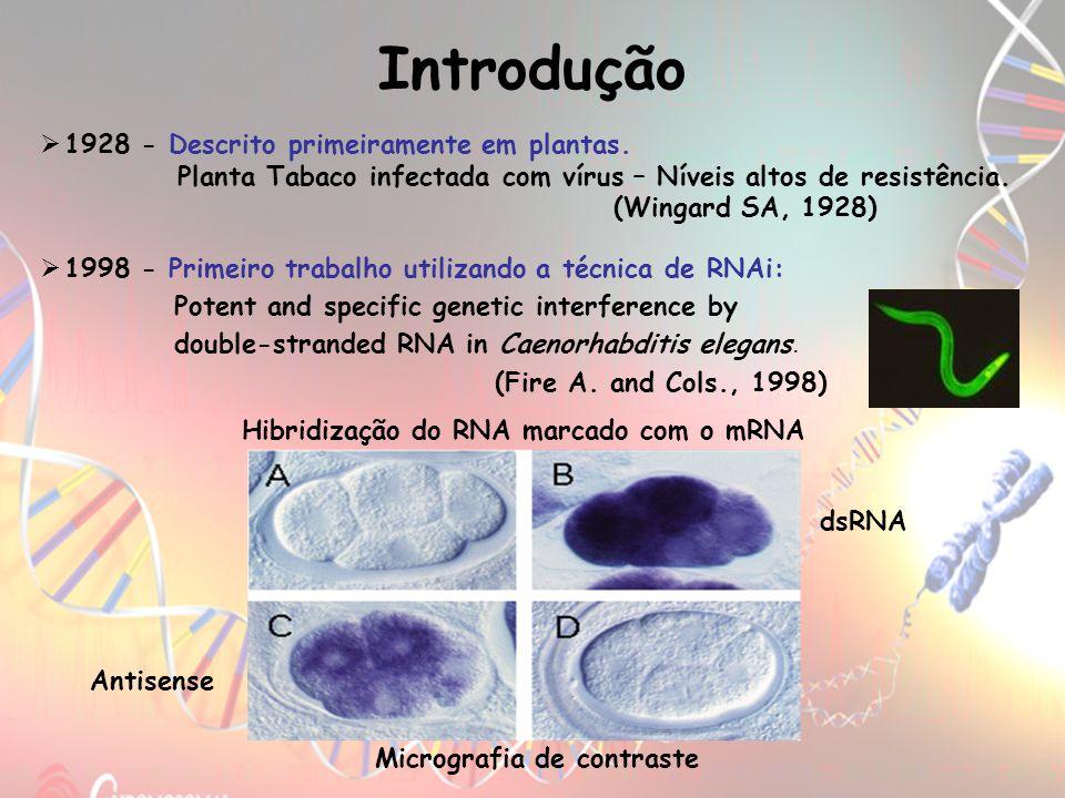 Introdução 1928 - Descrito primeiramente em plantas.