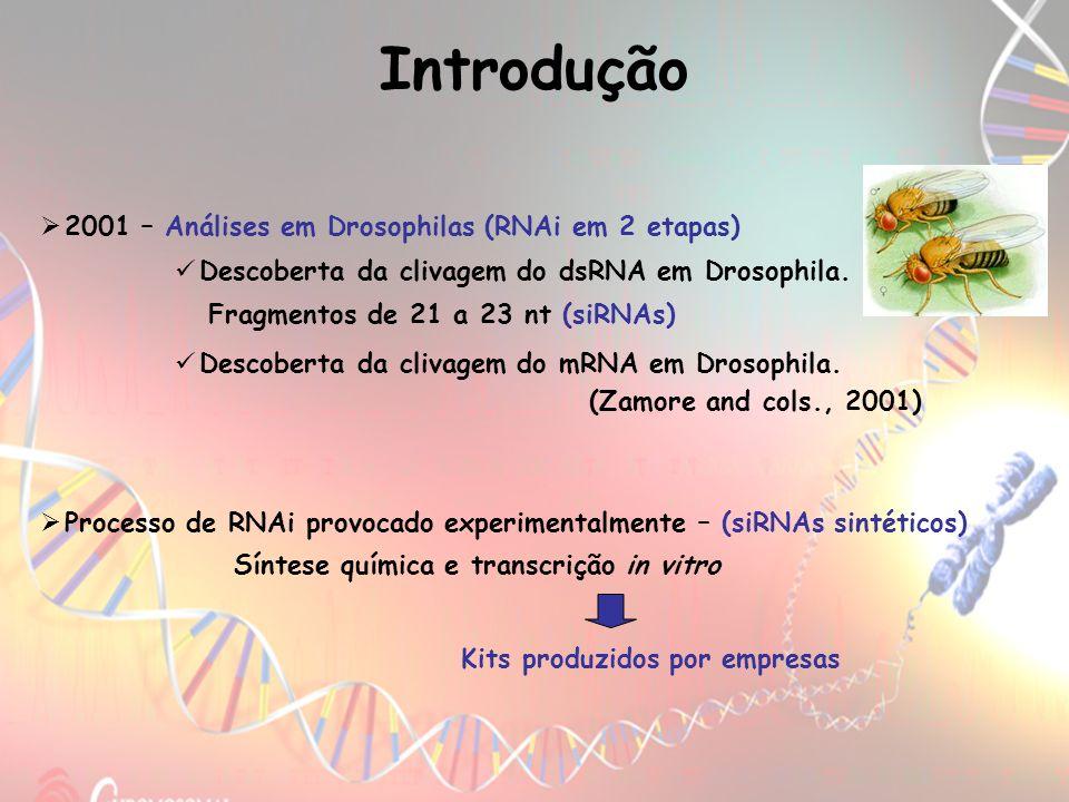 Introdução 2001 – Análises em Drosophilas (RNAi em 2 etapas)