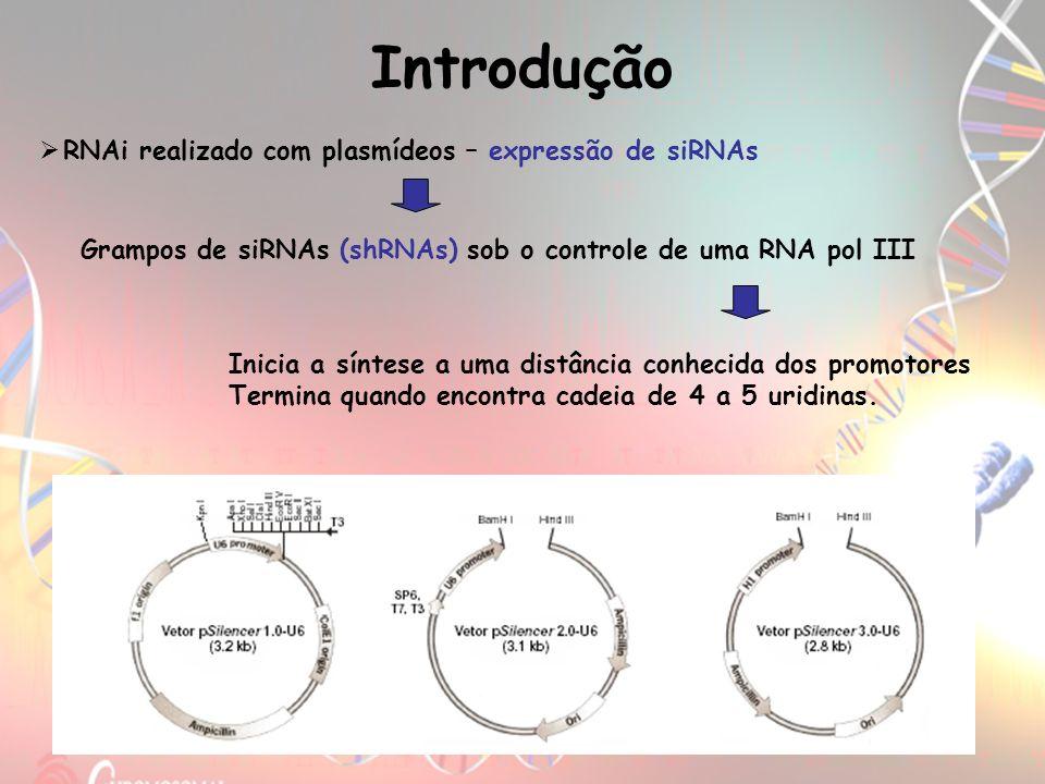Introdução RNAi realizado com plasmídeos – expressão de siRNAs