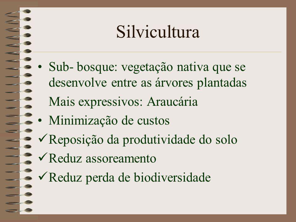 Silvicultura Sub- bosque: vegetação nativa que se desenvolve entre as árvores plantadas. Mais expressivos: Araucária.