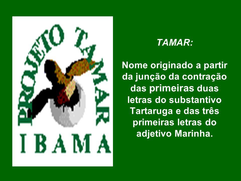 TAMAR: Nome originado a partir da junção da contração das primeiras duas letras do substantivo Tartaruga e das três primeiras letras do adjetivo Marinha.