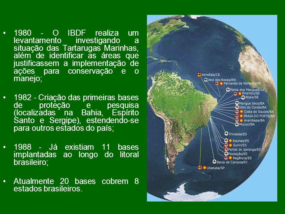 1980 - O IBDF realiza um levantamento investigando a situação das Tartarugas Marinhas, além de identificar as áreas que justificassem a implementação de ações para conservação e o manejo;