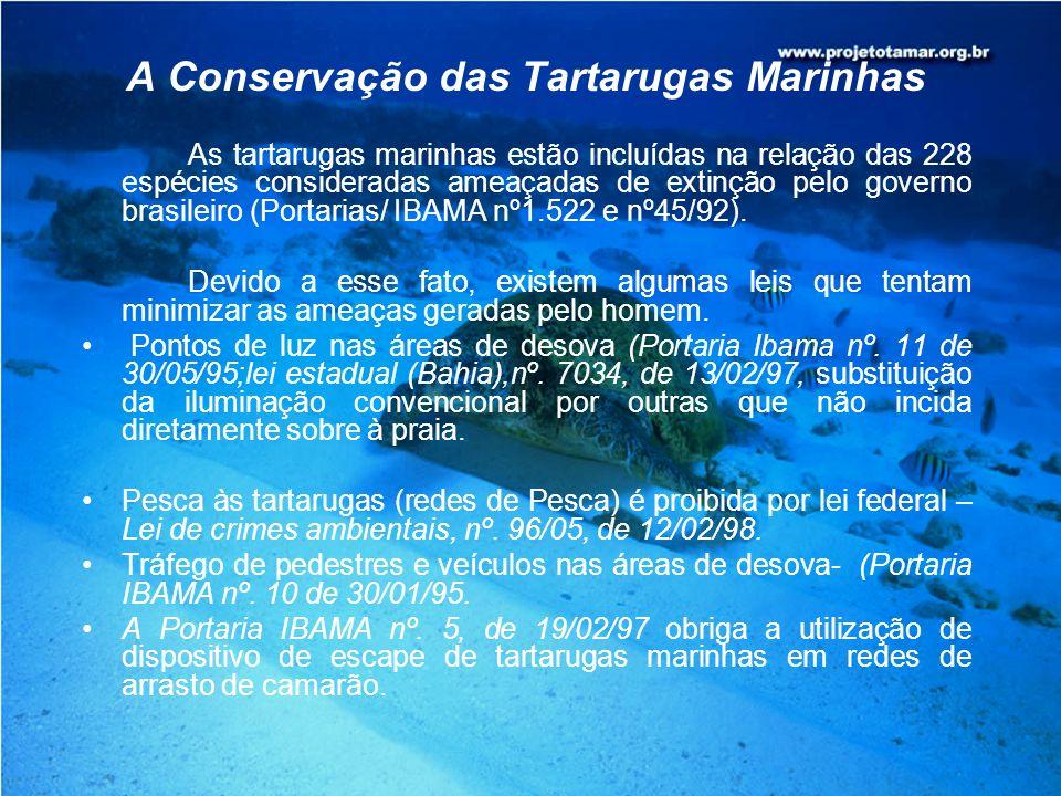 A Conservação das Tartarugas Marinhas