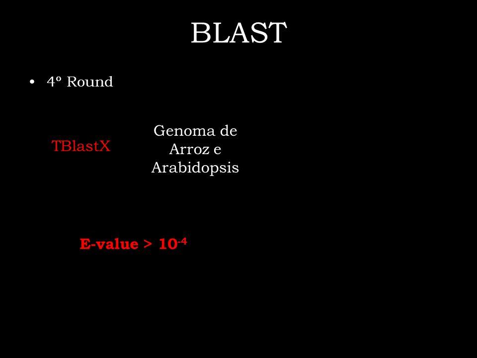 Genoma de Arroz e Arabidopsis
