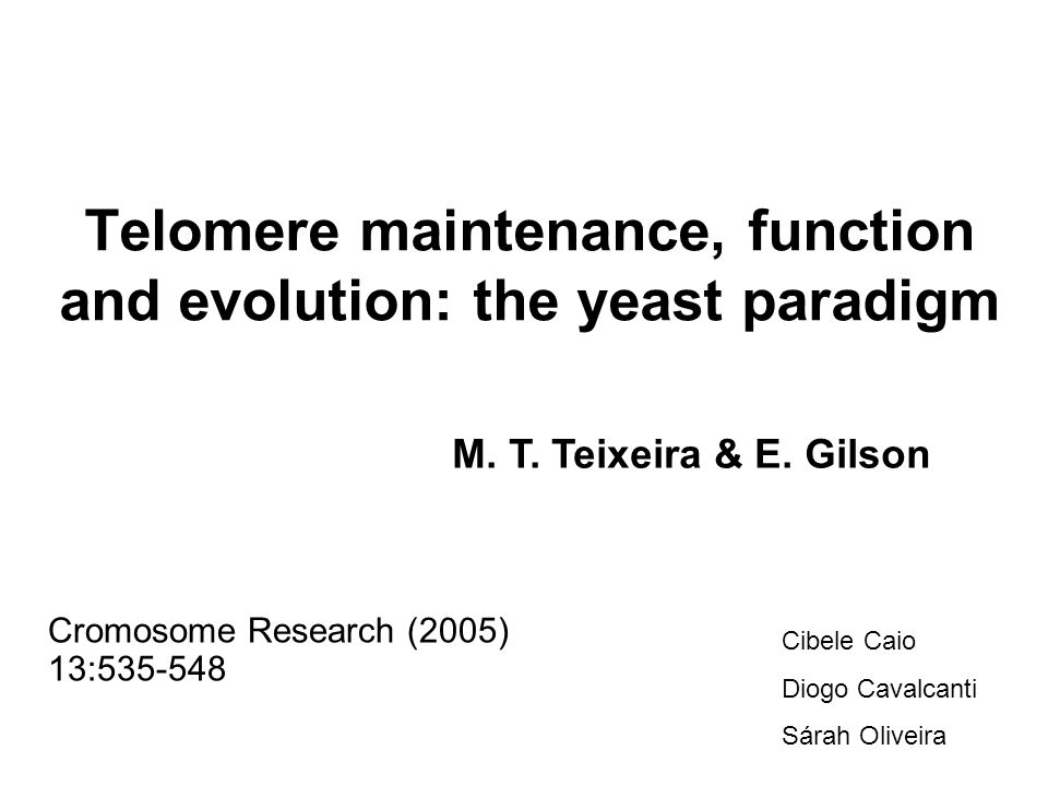 Telomere maintenance, function and evolution: the yeast paradigm