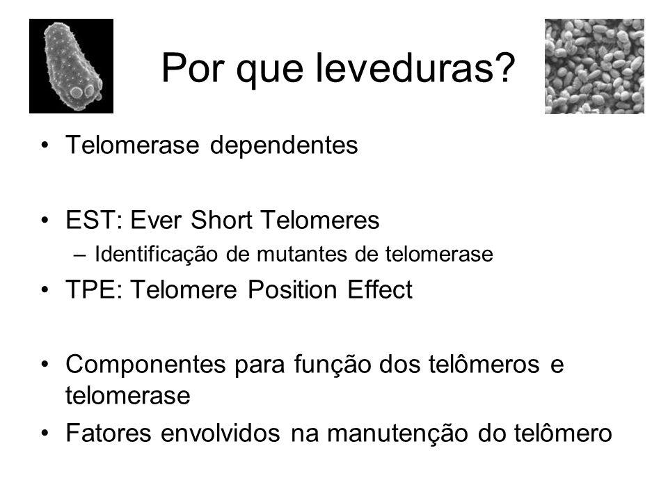 Por que leveduras Telomerase dependentes EST: Ever Short Telomeres