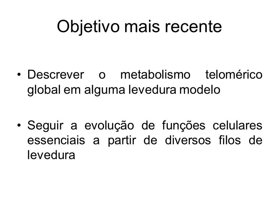 Objetivo mais recente Descrever o metabolismo telomérico global em alguma levedura modelo.