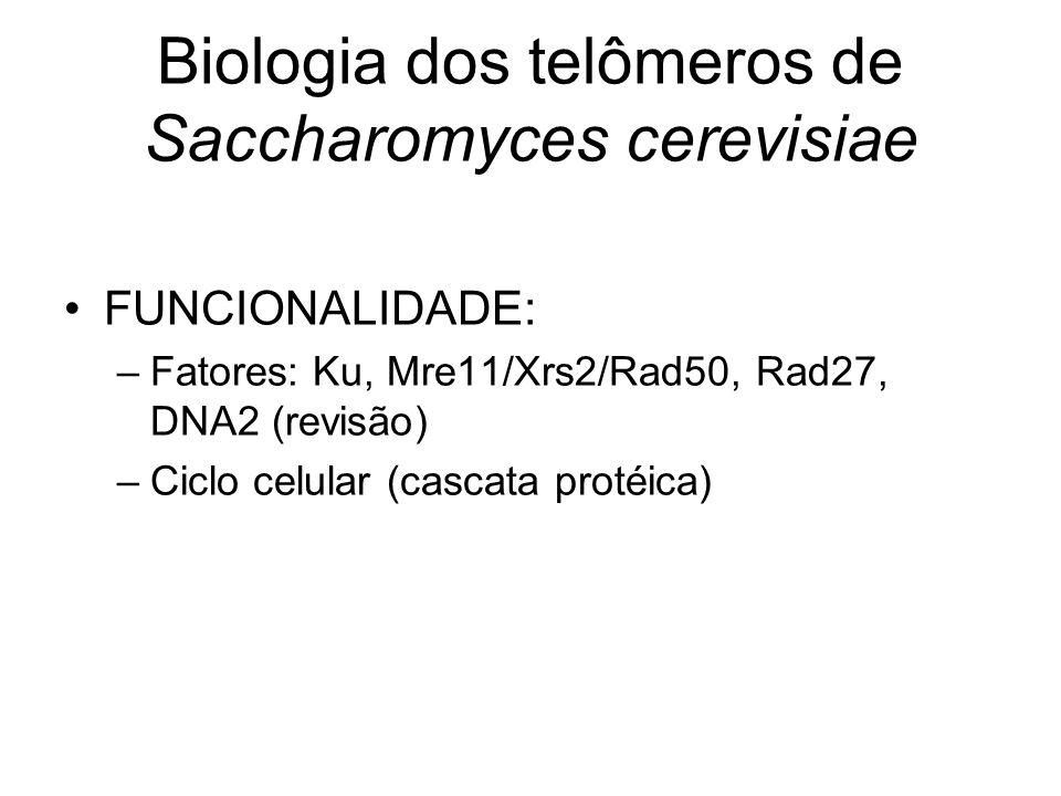 Biologia dos telômeros de Saccharomyces cerevisiae