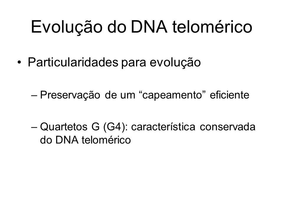 Evolução do DNA telomérico