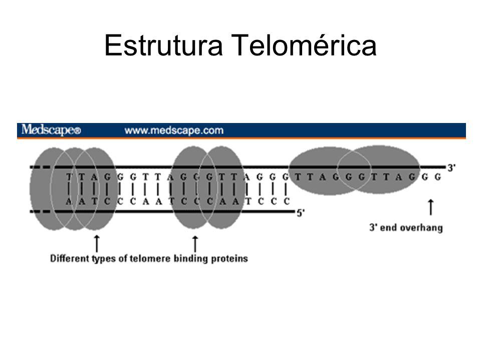 Estrutura Telomérica