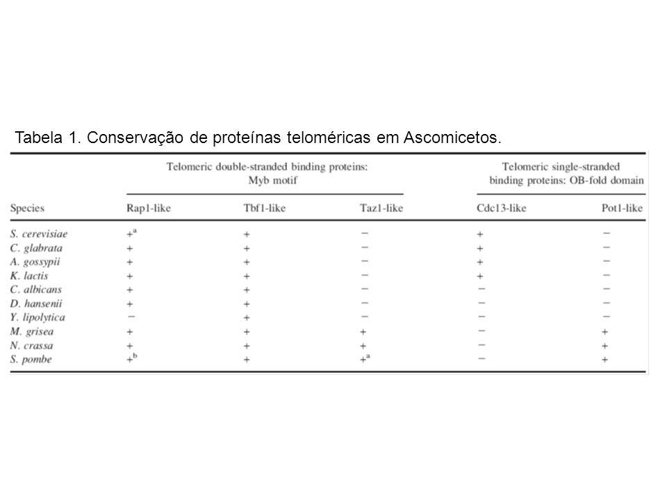 Tabela 1. Conservação de proteínas teloméricas em Ascomicetos.