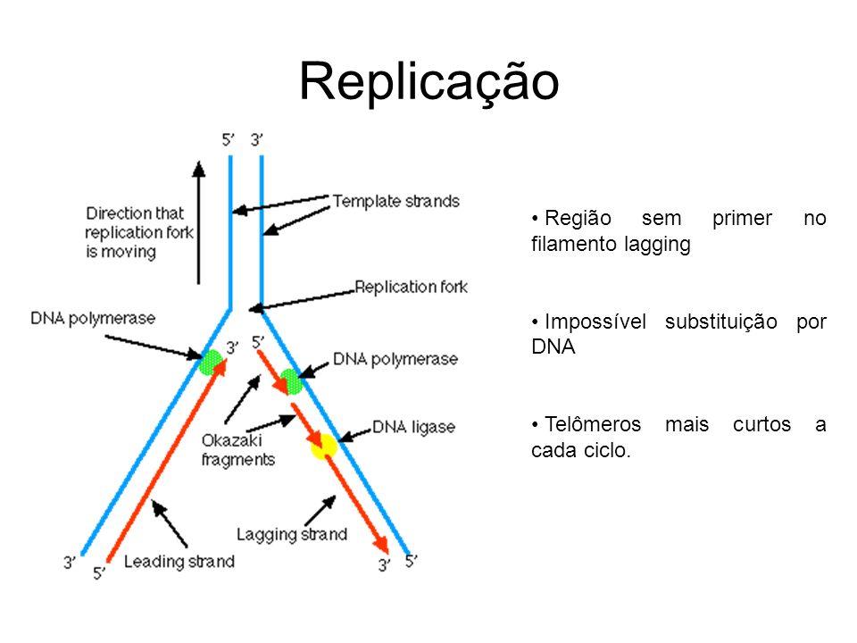 Replicação Região sem primer no filamento lagging
