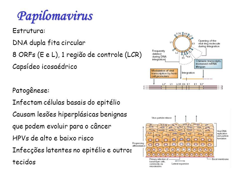 Papilomavirus Estrutura: DNA dupla fita circular