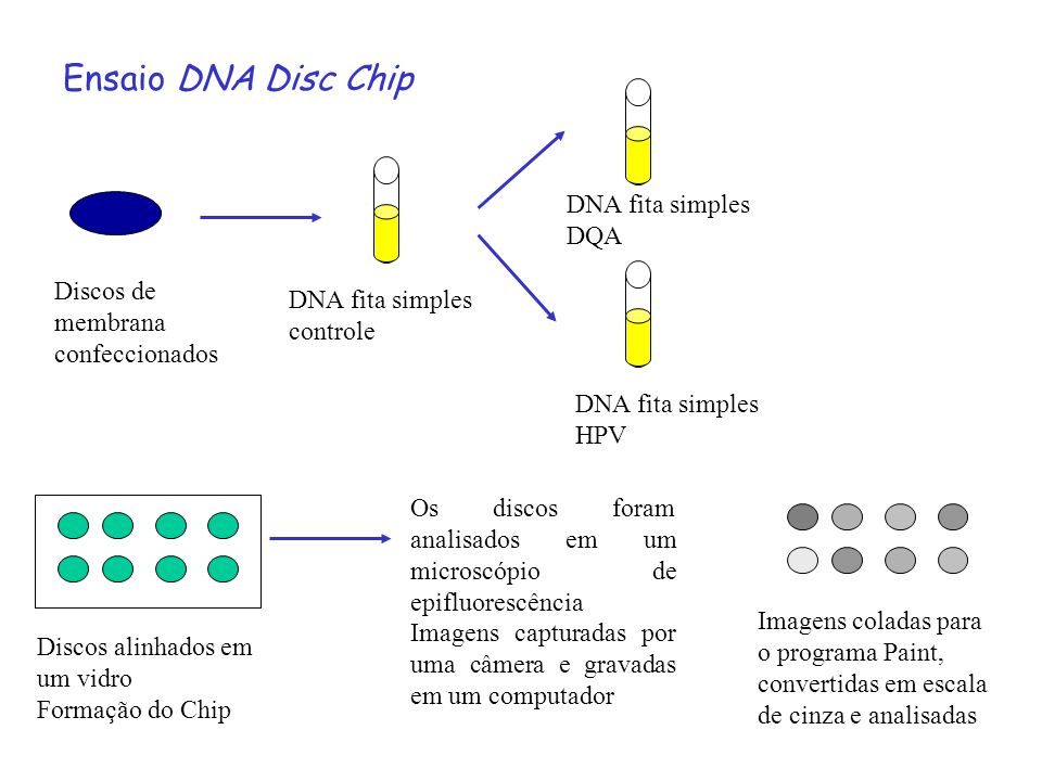 Ensaio DNA Disc Chip DNA fita simples DQA