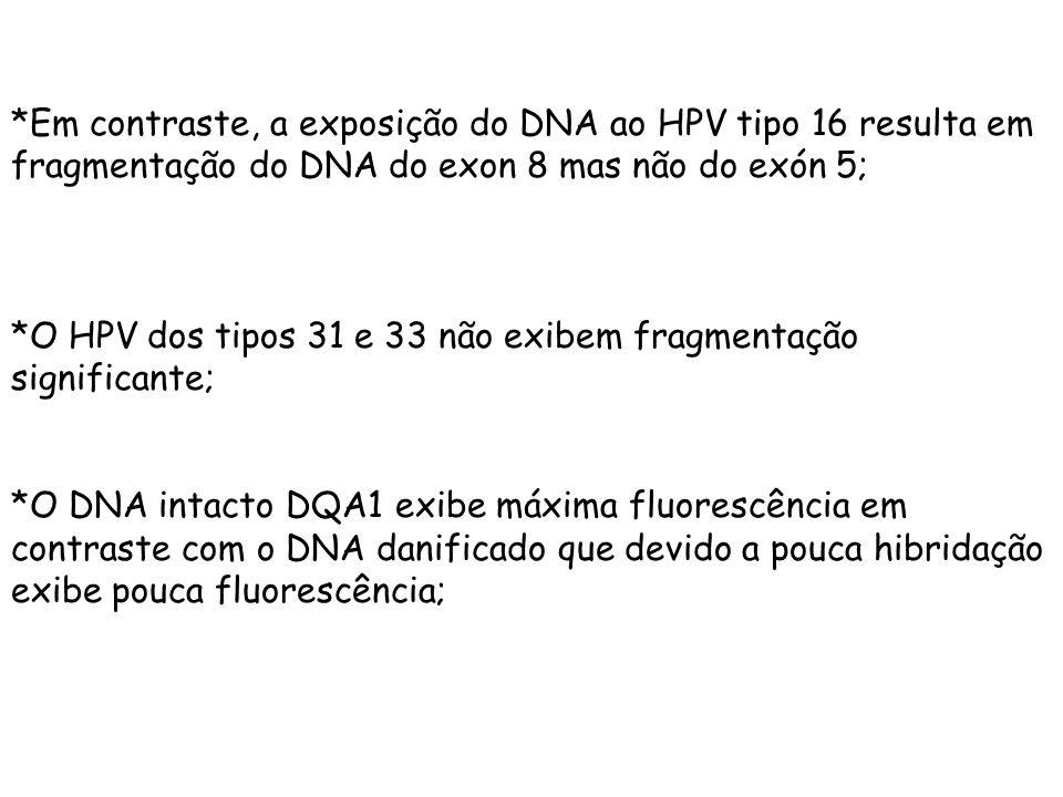 *Em contraste, a exposição do DNA ao HPV tipo 16 resulta em fragmentação do DNA do exon 8 mas não do exón 5;