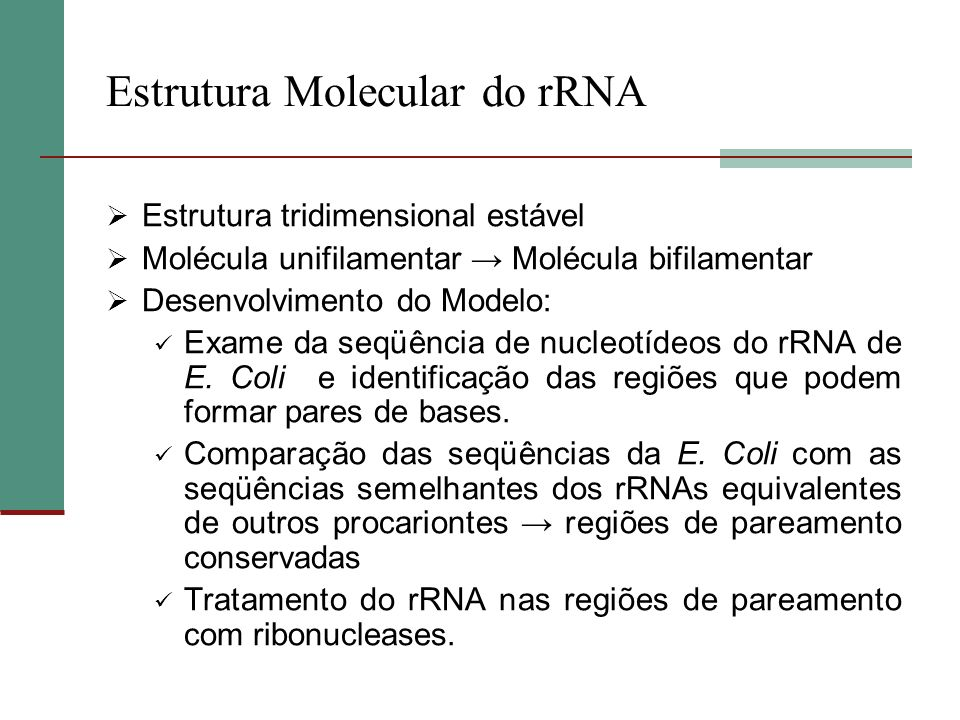 Estrutura Molecular do rRNA