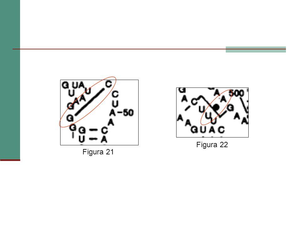 Figura 22 Figura 21