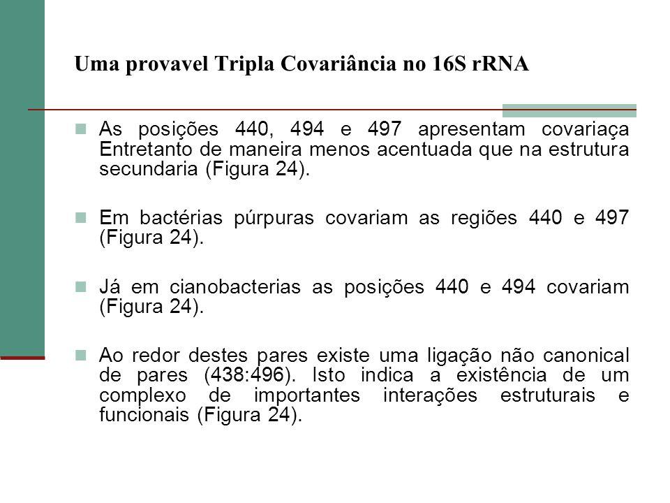 Uma provavel Tripla Covariância no 16S rRNA