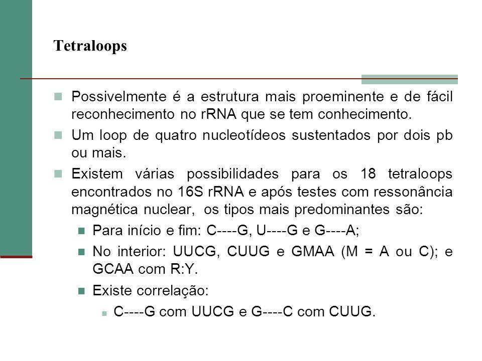 Tetraloops Possivelmente é a estrutura mais proeminente e de fácil reconhecimento no rRNA que se tem conhecimento.