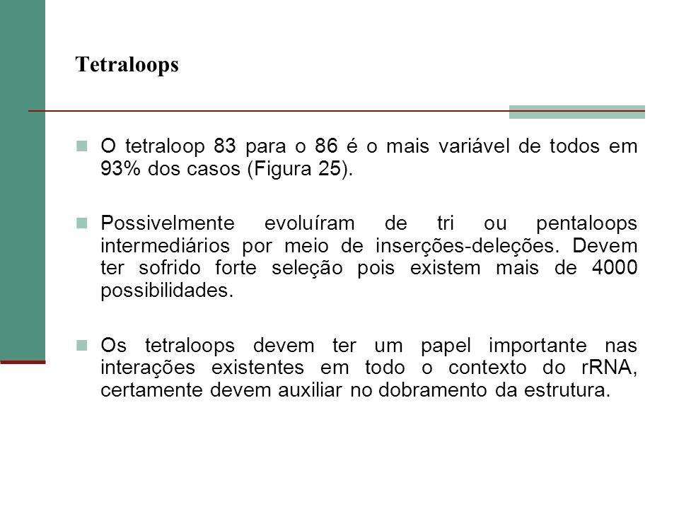 Tetraloops O tetraloop 83 para o 86 é o mais variável de todos em 93% dos casos (Figura 25).