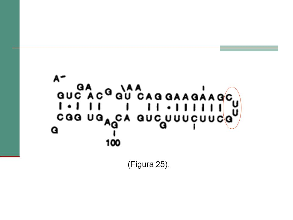 (Figura 25).