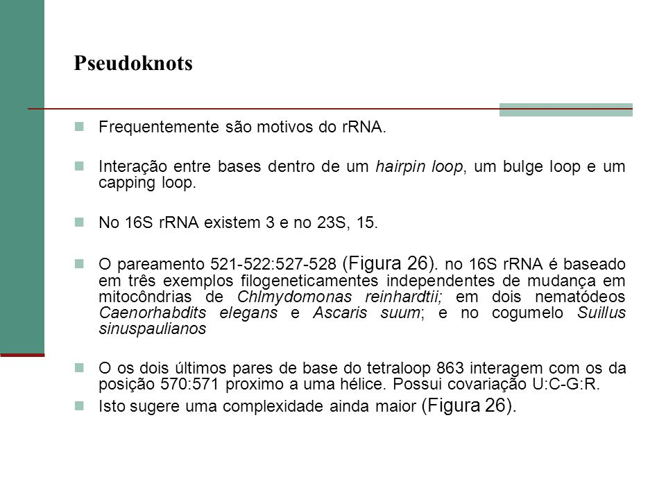 Pseudoknots Frequentemente são motivos do rRNA.
