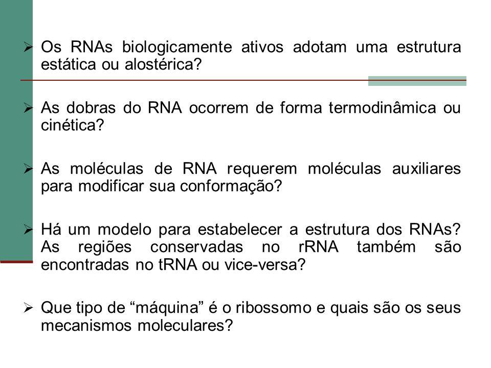Os RNAs biologicamente ativos adotam uma estrutura estática ou alostérica