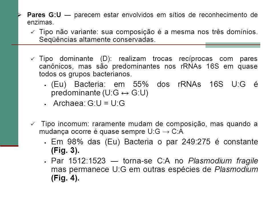 (Eu) Bacteria: em 55% dos rRNAs 16S U:G é predominante (U:G ↔ G:U)