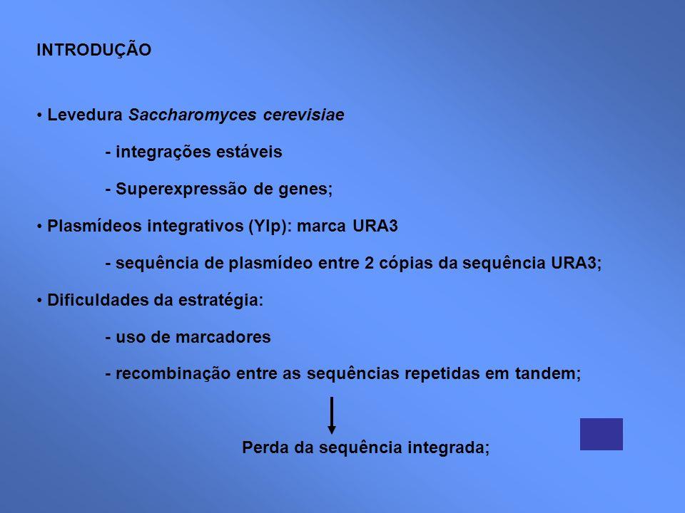 INTRODUÇÃO Levedura Saccharomyces cerevisiae. - integrações estáveis. - Superexpressão de genes; Plasmídeos integrativos (YIp): marca URA3.