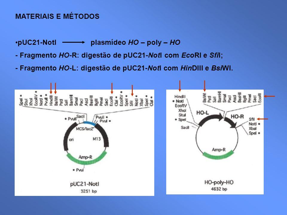 MATERIAIS E MÉTODOS pUC21-NotI plasmídeo HO – poly – HO. - Fragmento HO-R: digestão de pUC21-NotI com EcoRI e SfiI;