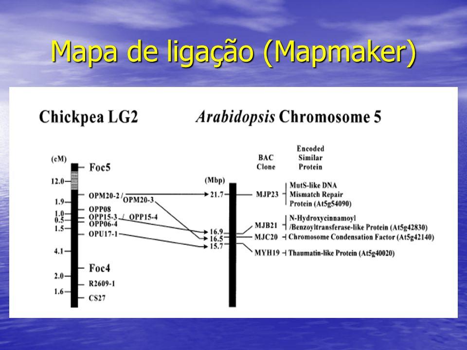 Mapa de ligação (Mapmaker)