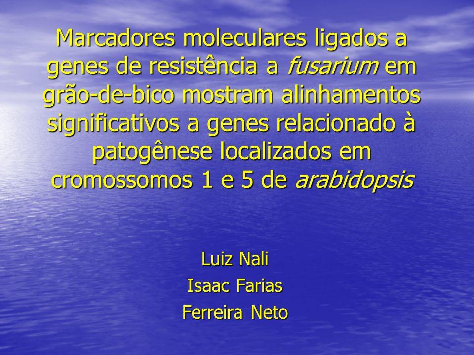 Luiz Nali Isaac Farias Ferreira Neto
