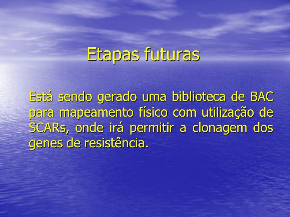 Etapas futuras