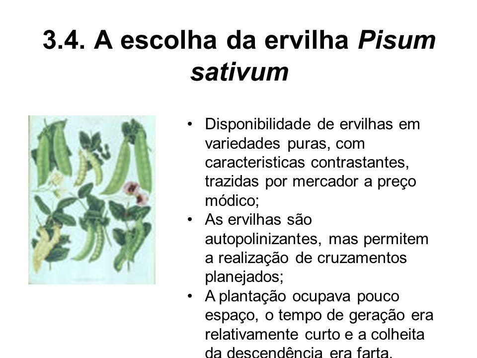 3.4. A escolha da ervilha Pisum sativum